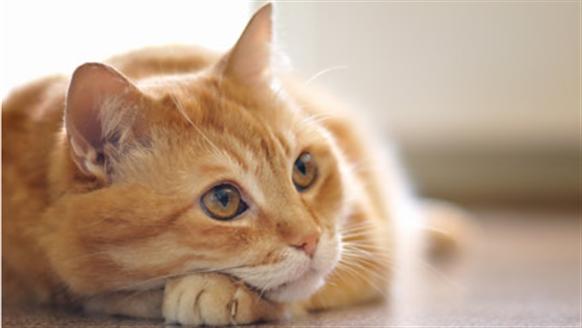 INTERNATIONAL CAT DAY!